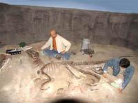 Dinossauros - Fósseis de Dinossauro
