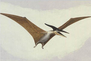 Dinossauros - Pteranodon