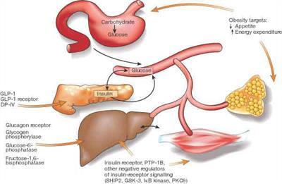 Síndrome metabólica - doenças cardiovasculares e diabetes mellitus