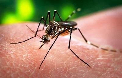 Zika Vírus - Sintomas, Prevenção e Informação